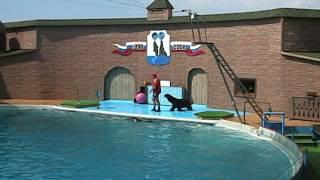 Дельфинарий, Адлер. Шоу дельфинов и морских котиков.