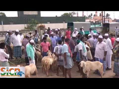 Sale of goat, sheep goes up for Bakrid