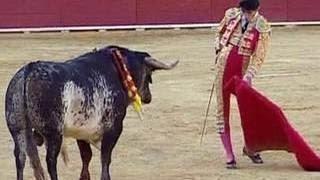 Бык убил испанского тореадора во время представления