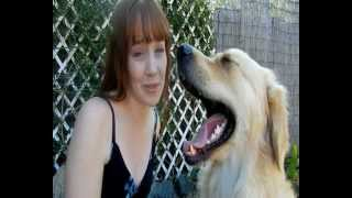 Teaching Your Dog To Boop (eskimo Kiss)