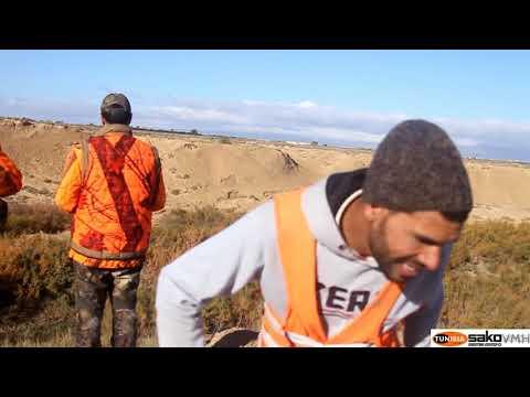 villisikajahti Tunisiassa , wildboar hunting in Tunisia, caccia , vildsvins jakt i Tunisien
