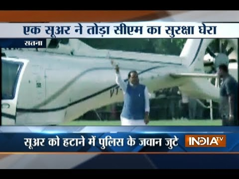 MP CM Shivraj's Helicopter Landing Delayed As Pig Enters Helipad