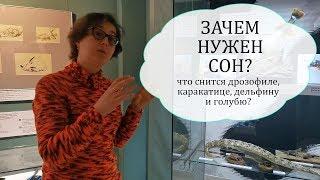 Экскурсия по выставке «В царстве Морфея». Анна Александрова