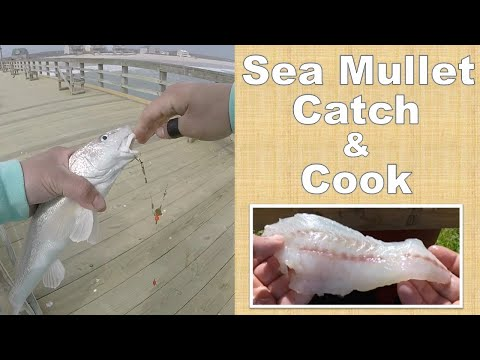 Sea Mullet (Whiting | Southern Kingfish) Catch And Cook (Two Preparation Methods)