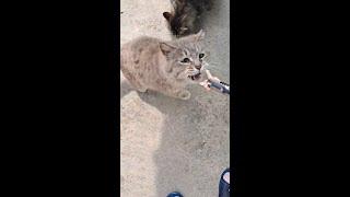 앞마당 고양이들  (닭고기 먹자)