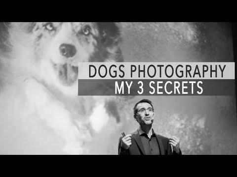 DOGS PHOTOGRAPHY - MY 3 SECRETS!