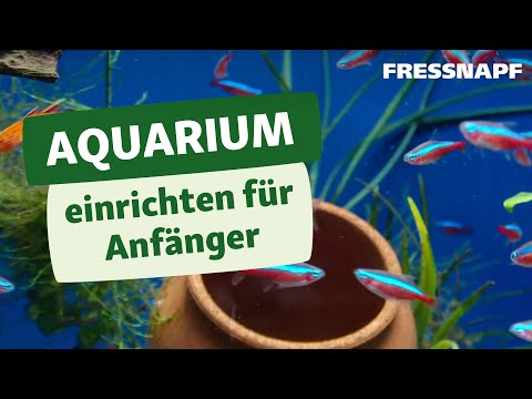 aquarium einrichten f r anf nger fressnapf youtube. Black Bedroom Furniture Sets. Home Design Ideas