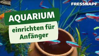 Aquarium einrichten für Anfänger | FRESSNAPF