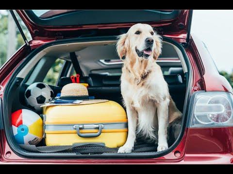 Pet Travel & Summer Safety
