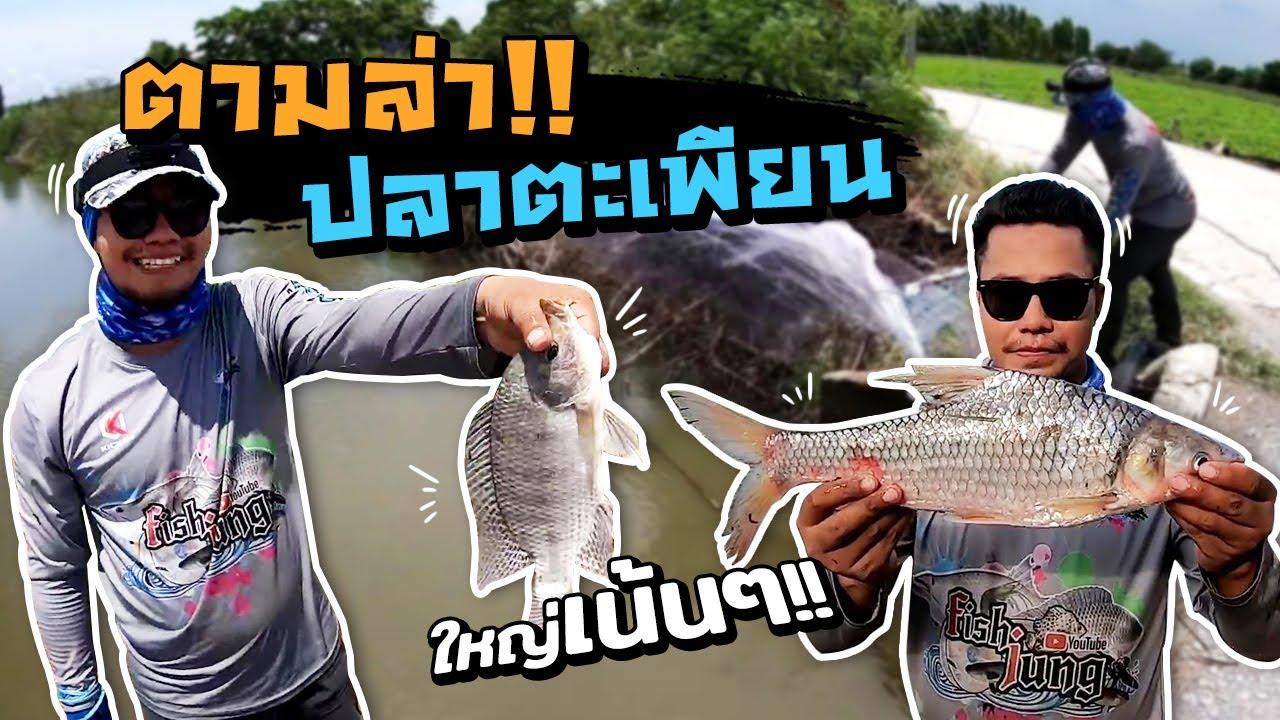 ตามล่าปลาตะเพียน #ฟิชจัง