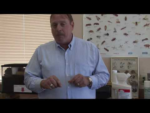Pest Control How To Kill Flying Termites