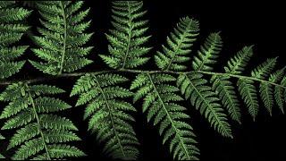 Cor:unedo - Felci III [Hurtanmaantie] (OFFICIAL VIDEO)