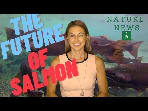 Nature News- THE FUTURE OF SALMON - Kaavan The Elephant- September 12, 2020