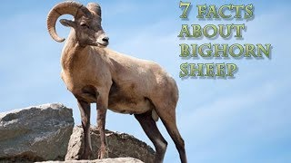 Bighorn Sheep Mascot School List