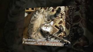 Смешные кошки видео до слез. Кошки ютуб видео.