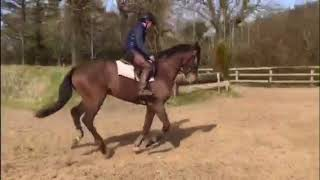 4yr old gelding by Tullabeg Fusion thumbnail