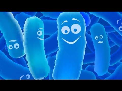 Top 10 Best Probiotic Foods | 2016 Review on the Benefits of Probiotics