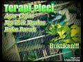 Terapi Pleci  Mp3 - Mp4 Download