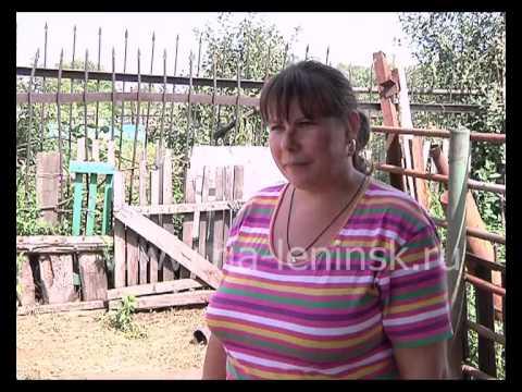 12 семей Ленинск-Кузнецкого района получат баранов по областной программе