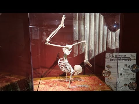 Orlando Rainy Day Ideas! | The Skeleton Museum!