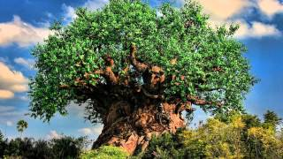 Repeat youtube video Tree of Life Area Music - Sunset