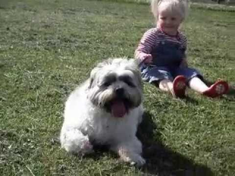 Are Lhasa Apso's a good family pet?