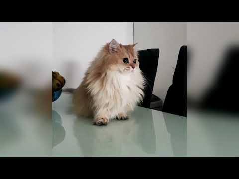Смешные Коты и Собаки  ПРИКОЛЫ С ЖИВОТНЫМИ  Калейдоскоп за 11 09 2018