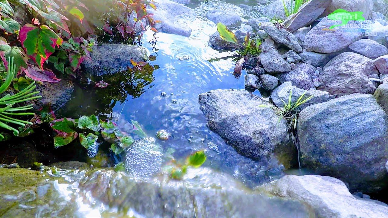 Bachlauf Reviewtipps Natur Wasserlauf Im Garten Bauen
