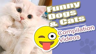 Funny Pet, Funny dog 🐶Funny Cat 😽 Funny Compilation Videos 🤣🤣🤣