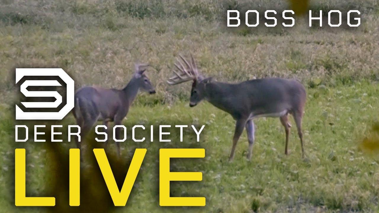 Download BOSS HOG: Early Season Muzzleloader Hunt! - DS LIVE Episode #6
