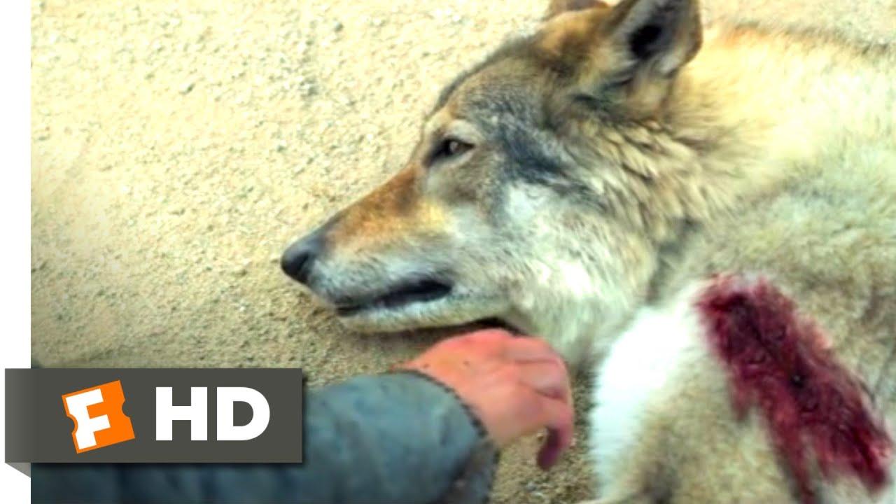 Alpha (2018) - Bonding with a Predator Scene