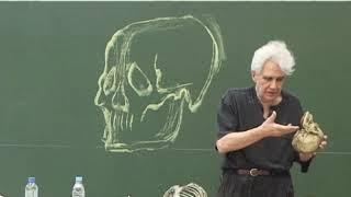 J.F. Debord : Le crâne, le cou et leurs muscles peauciers