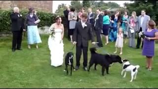 Dog Gives a Bride a Special Wedding Present