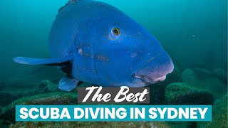 The Best Scuba Diving in Sydney