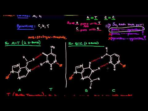 DNA Structure - Base Pair Hydrogen Bonding and Melting Temperature