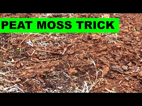 Why I use peat moss in a renovation