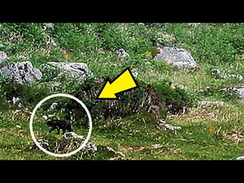 5 Hellhounds Caught On Camera & Spotted In Real Life!