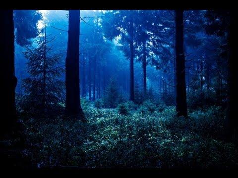 Sonidos De La Selva Y Pájaros Música Relajante Youtube