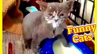 Funny Cat Videos #35  Cute Cat Videos  Cute Cat Clips