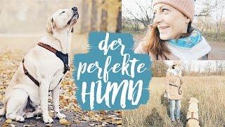 Der PERFEKTE Hund | HUNDE VLOG | IKARUSDOODLE