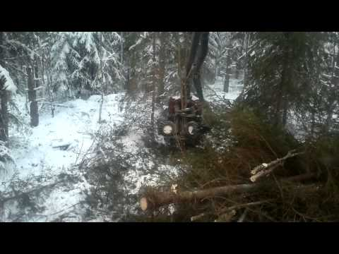 First thinning of forest at winter with harvester