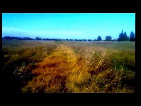 ΕΠΙΘΕΣΗ 2 ΑΛΕΠΟΥΔΩΝ ΣΕ ΦΡΑΓΚΟΚΟΤΕΣ - THE LAW OF NATURE - Euphoria Farm Retreat Wildlife