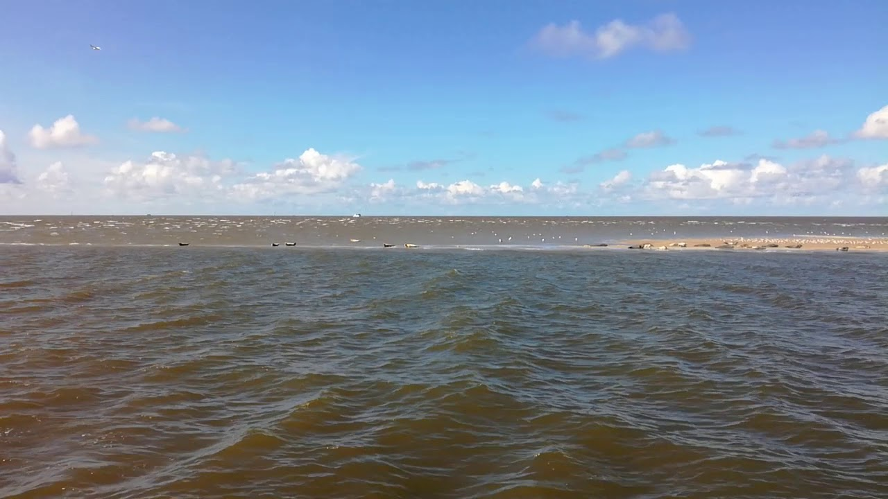 Seehundbänke Cuxhaven - YouTube