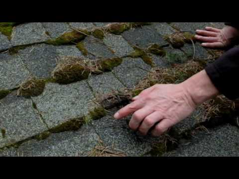 do-you-have-moss-on-your-roof?