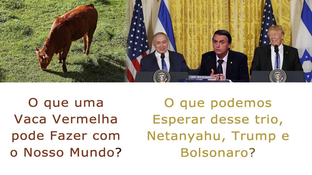 ●Mistério da vaca vermelha e Posse presidencial
