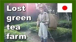 Searching for the lost green tea farm 失われた緑茶ファームの検索 - Walking in Japan 日本でのウォーキング