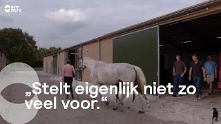 De mannen maken kennis met de paarden van Steffi | Boer zoekt Vrouw