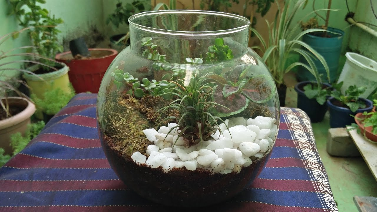 How To Make Terrarium Creative Gardening Youtube