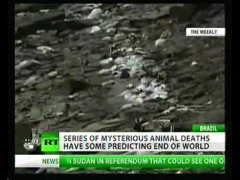"NWW World-News (09.01.2011) (""AFLOCKALYPSE NOW""  ""the answers"")"