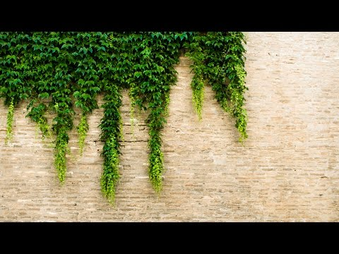 The Insider's Guide To Ivy League Admissions 2.0 | Webinar | Admissionado
